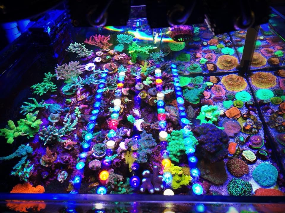 OR-strip-LED-light-reef-aquário