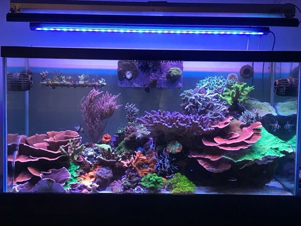 OR2 bar LED Best Reef akvarium LED-lampor 2019 Orphek