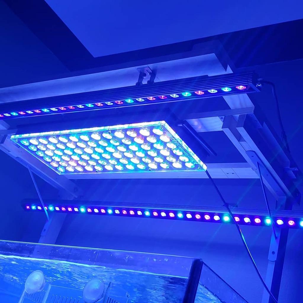 Reef-akvaryum-LED ışıkları-2019-Orphek