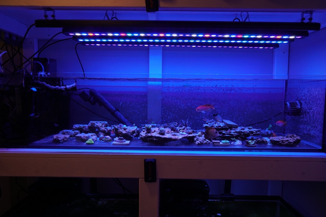 The Best Reef Aquarium LED lyser 2019 Orphek-95