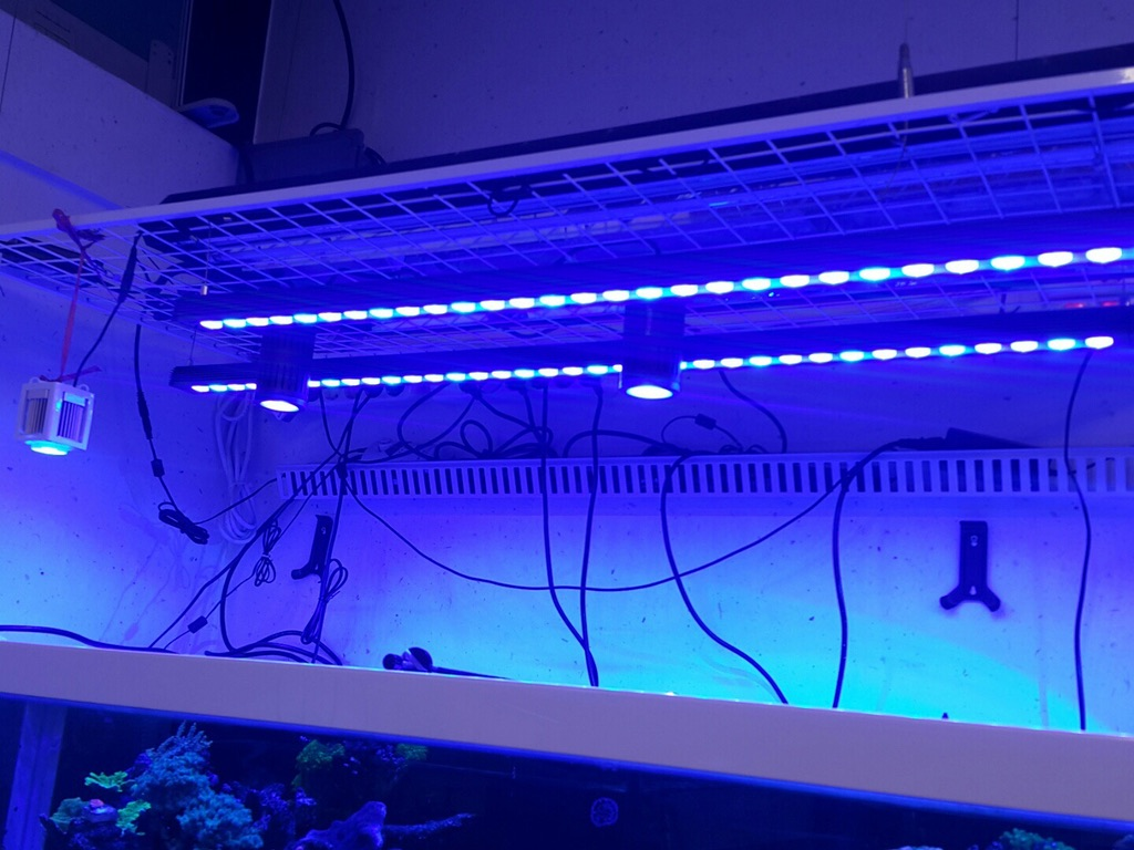 aquarium bleu-led-strip-reef