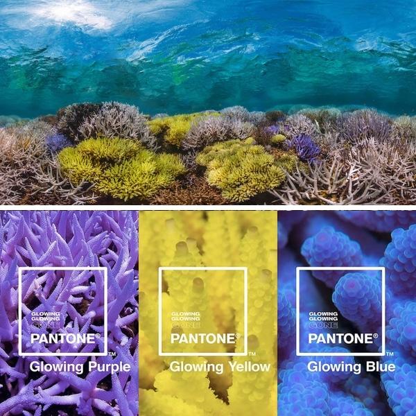 brilhando-brilhando-foi-pantone-oceano-quadrado-1
