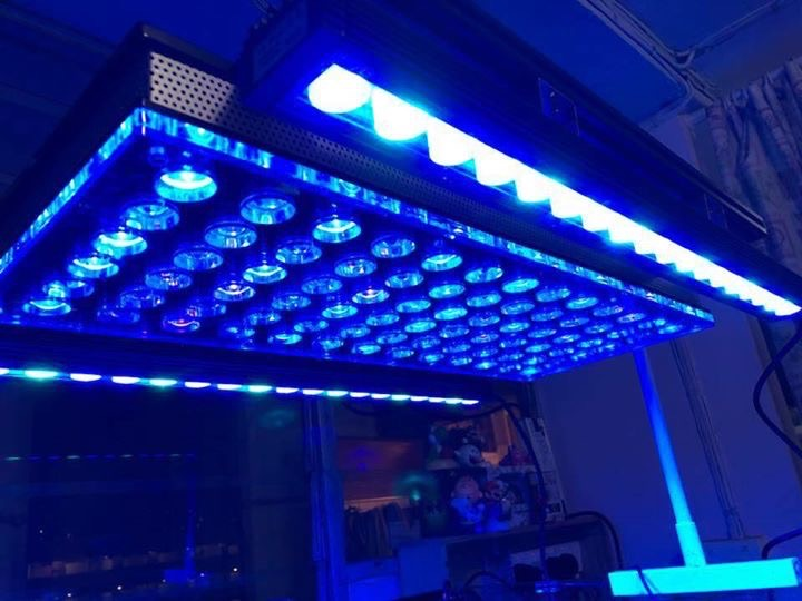 orphek-Atlantik-and-OR2-LED-bar