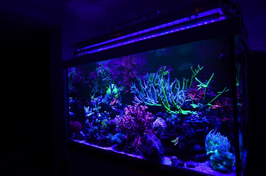 uv-LED-bar-coral-récif-aquarium