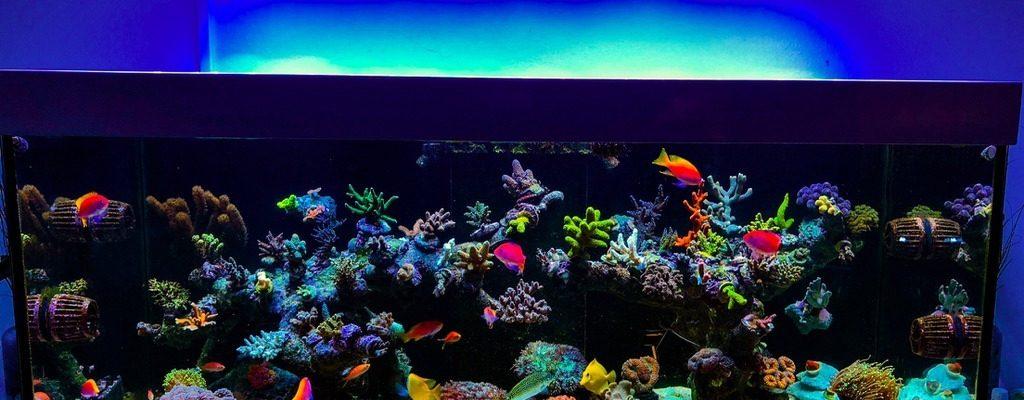 best reef aquarium LED lighting