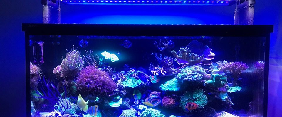 2020 reef aquarium strip LED lights