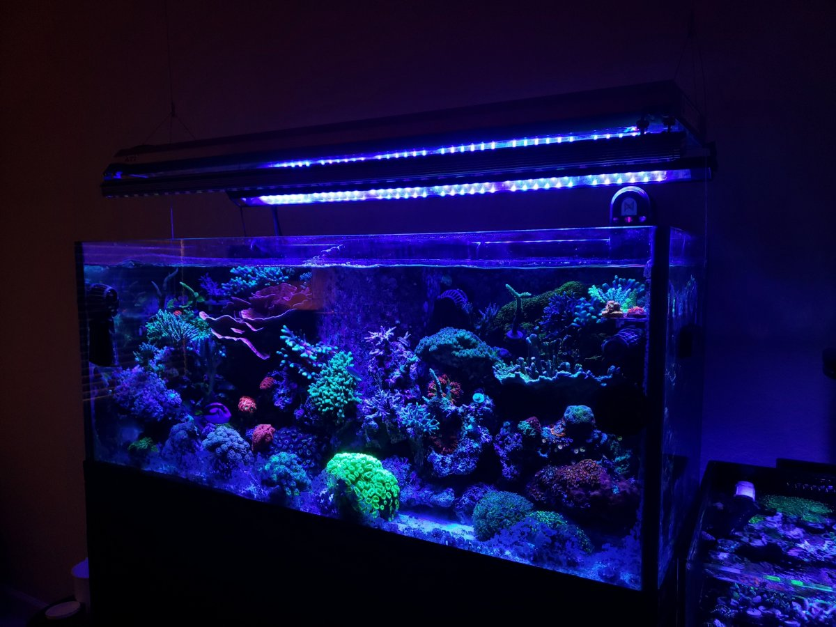2020 best reef aquarium LED bar