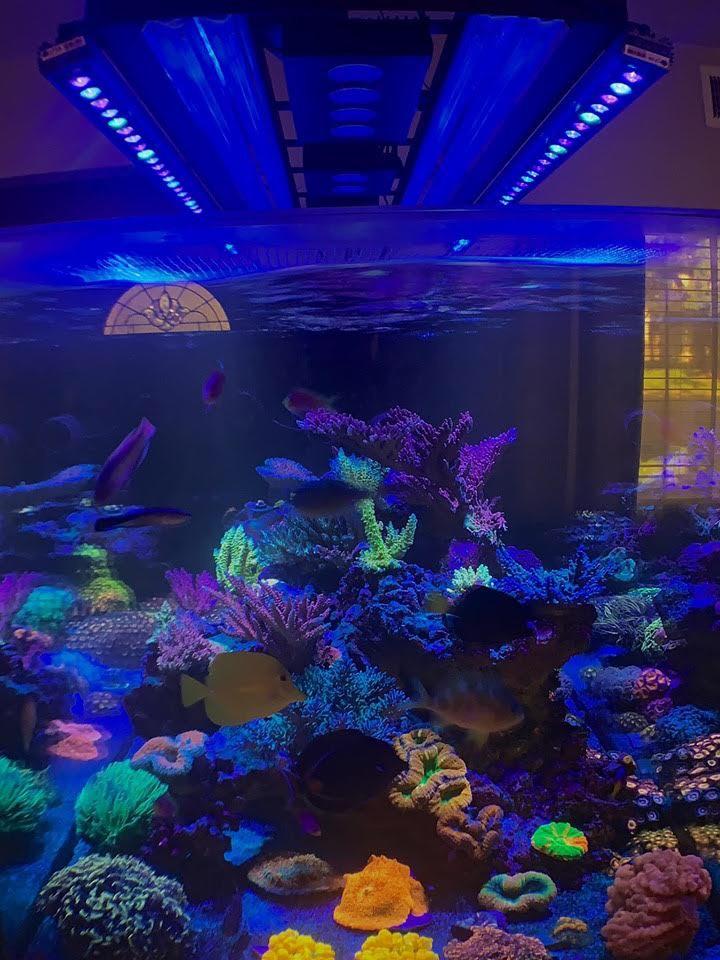 ਐਕਸਐਨਯੂਐਮਐਕਸ ਦੇ ਵਧੀਆ ਰੀਫ ਟੈਂਕ ਦੀ LED ਰੋਸ਼ਨੀ