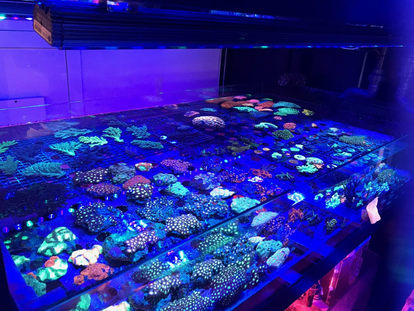 2019-2020 reef-aquarium-LED-bar-OR2-orphek