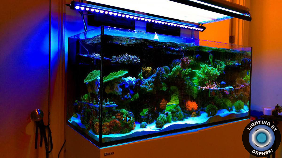 amazing coral pop LED lighting