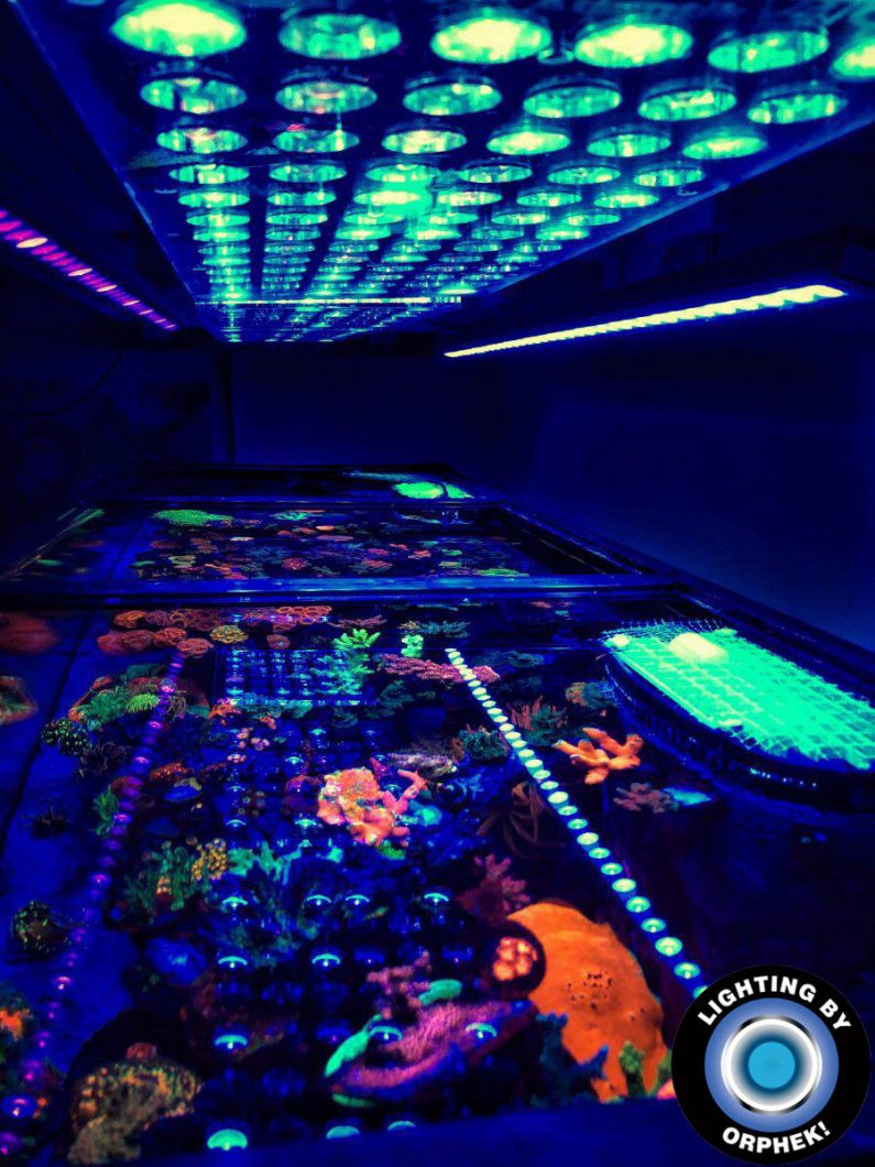 highest quality reef aquarium led lighting 2020