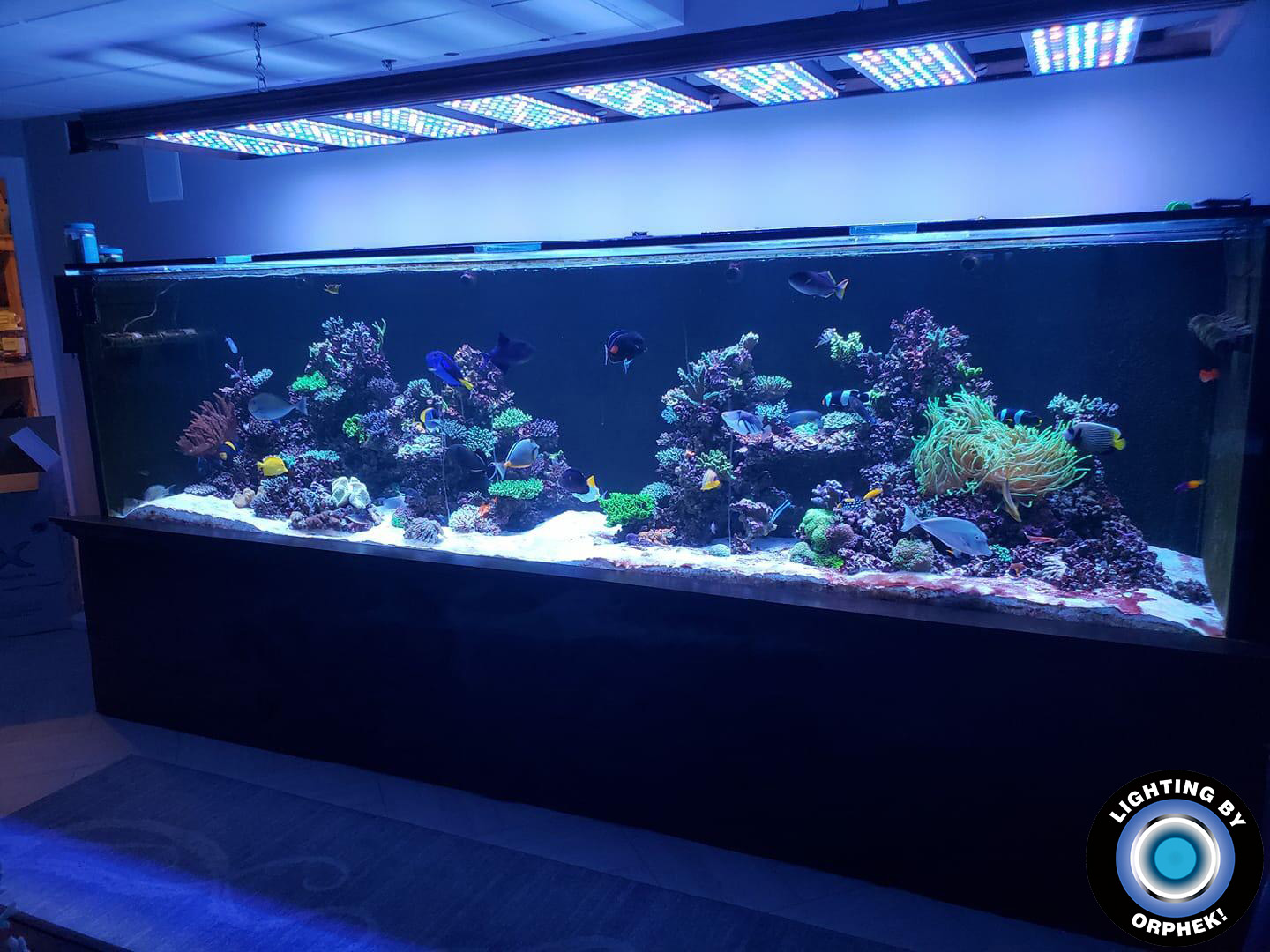 8 units of Atlantik V4 for a big aquarium display