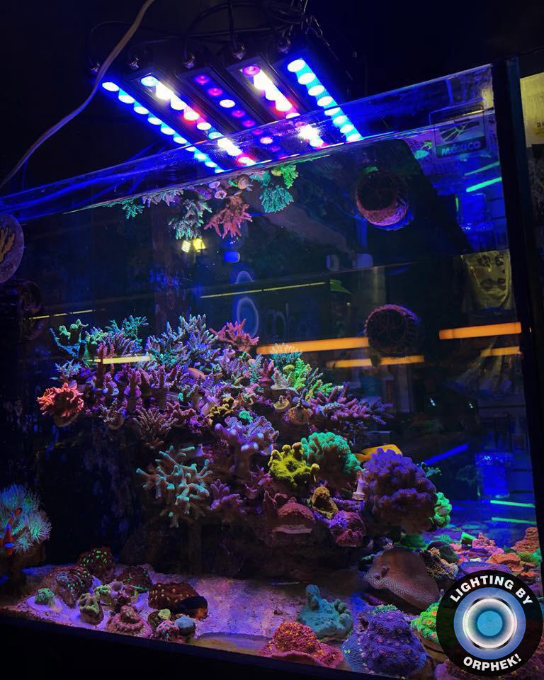 strongest reef tank LED strip 2020
