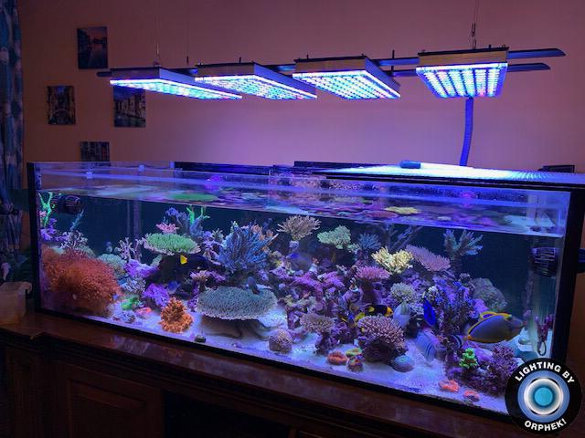 acuario de arrecife de aguas profundas iluminación marina