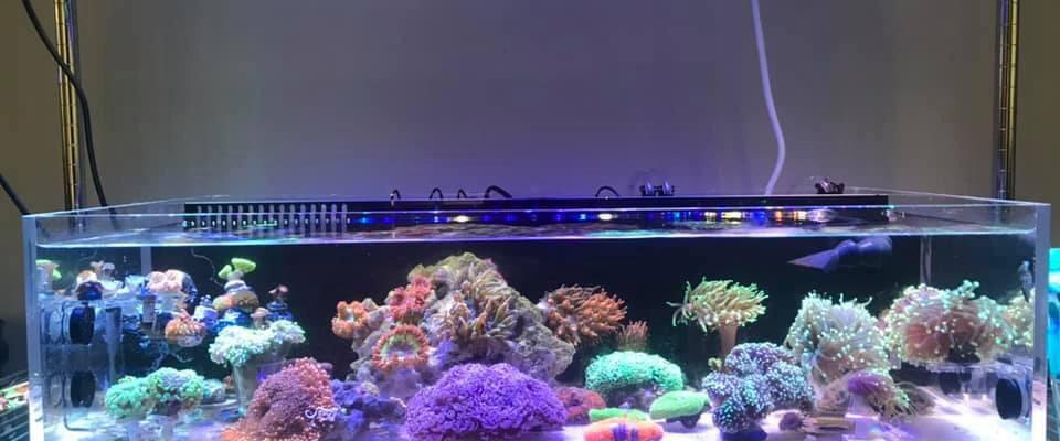 orphek OR reef bar led light