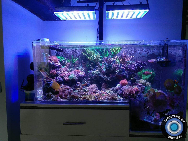mejor iluminación acuario de arrecife de agua salada 2020