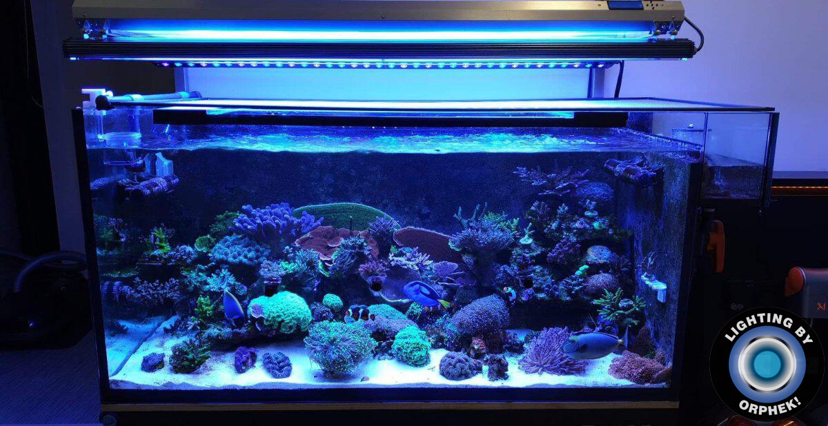 osvetlenie akvária s osvetleným útesom