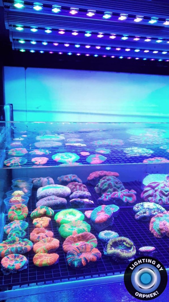 fastest coral pop LED strip 2020