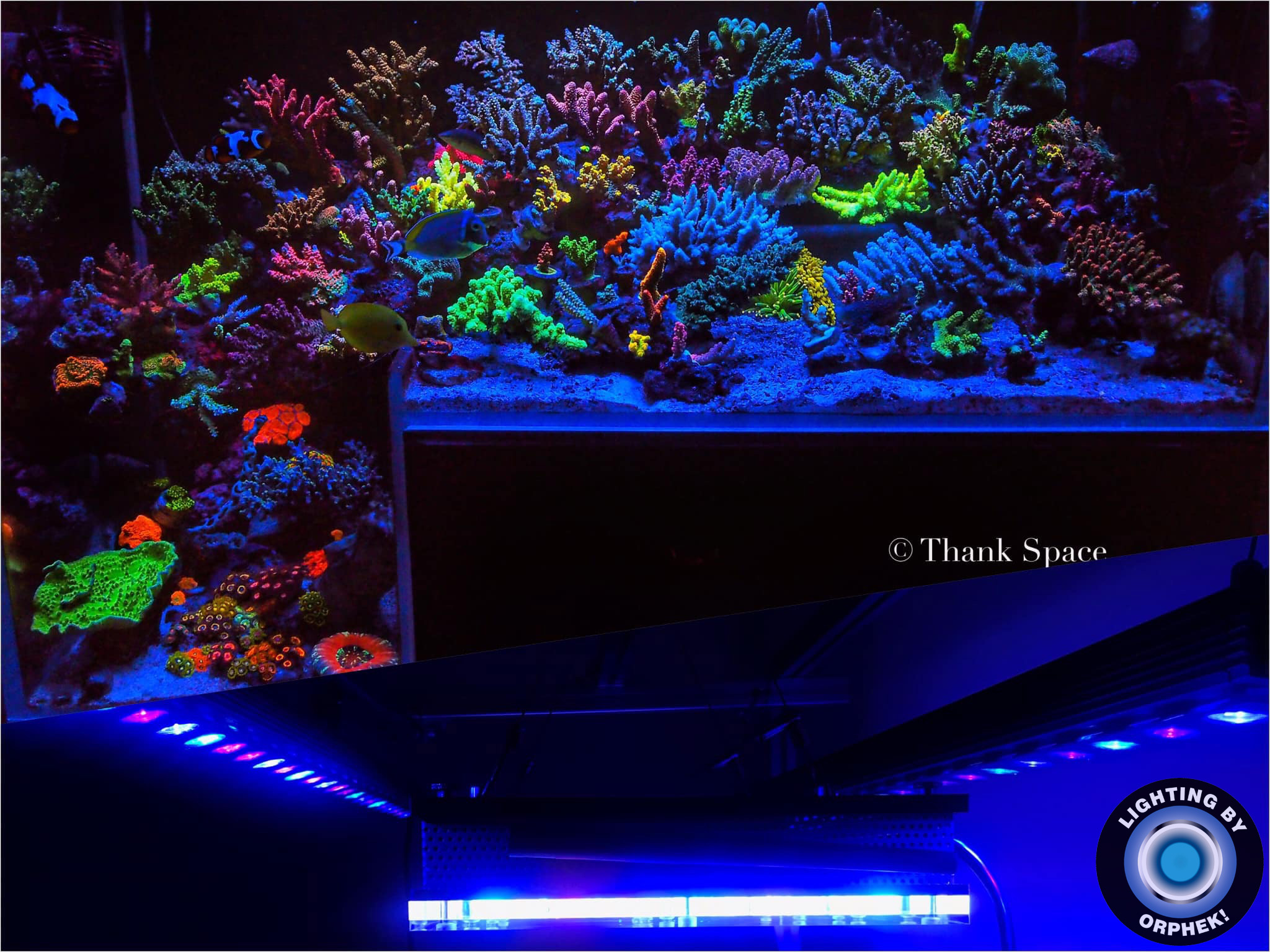 orphek 조명 최고의 산호 팝 리프 LED