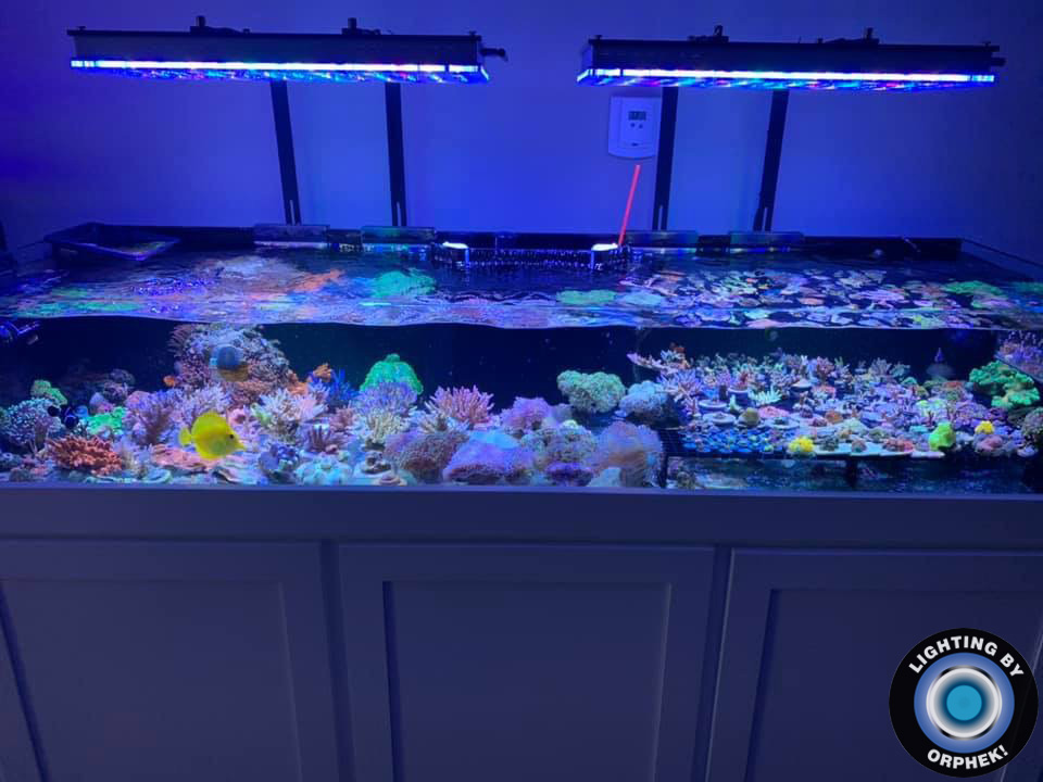 top best reef tank LED lighting