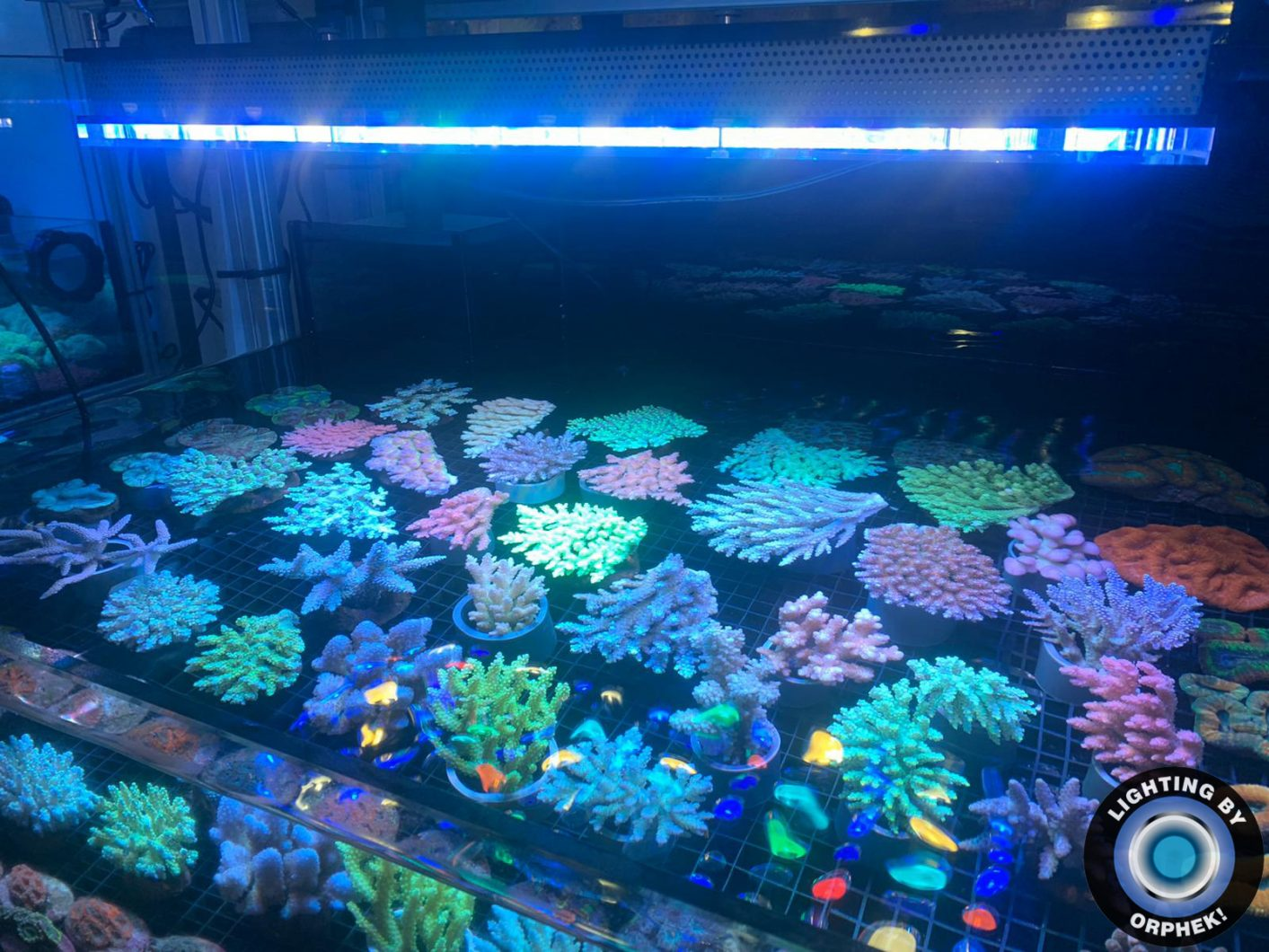 best coral growth reef aquarium LED lighting 2020