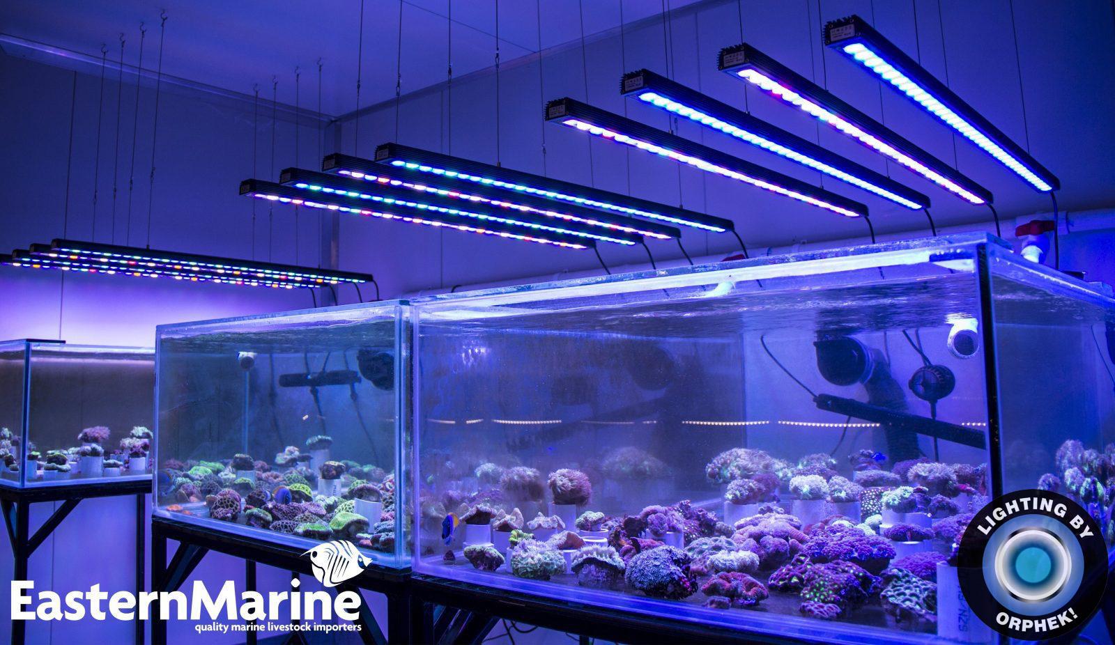Орфей сильнейший риф аквариум светодиодная лента