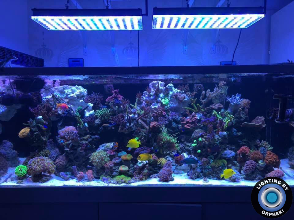 best saltwater reef kingdom aquarium lighting 2020