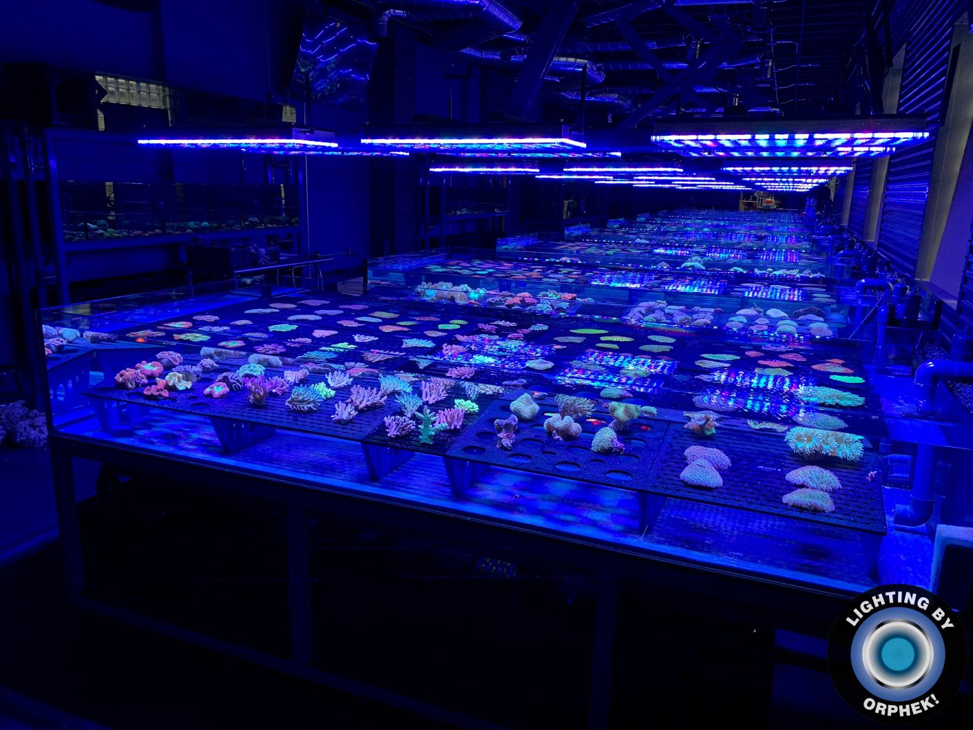 paling apik reef aquarium LED lighting 2020