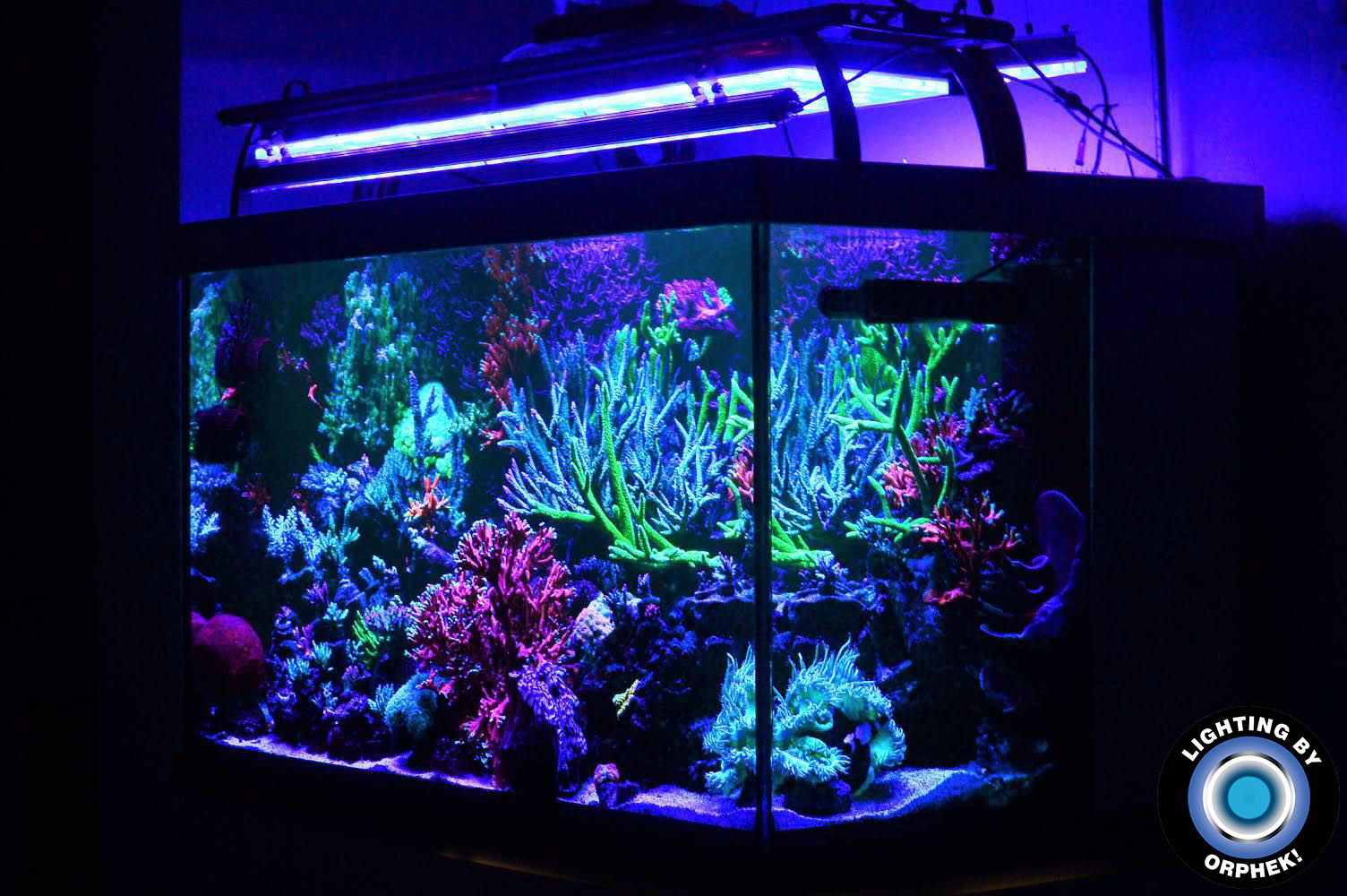 amazing reef kingdom grew with orphek LED lighting