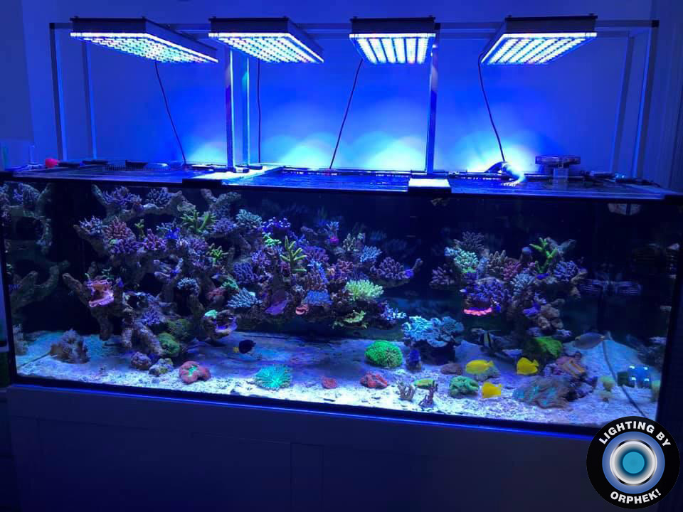 atlantik v4 best aquarium led light 2020