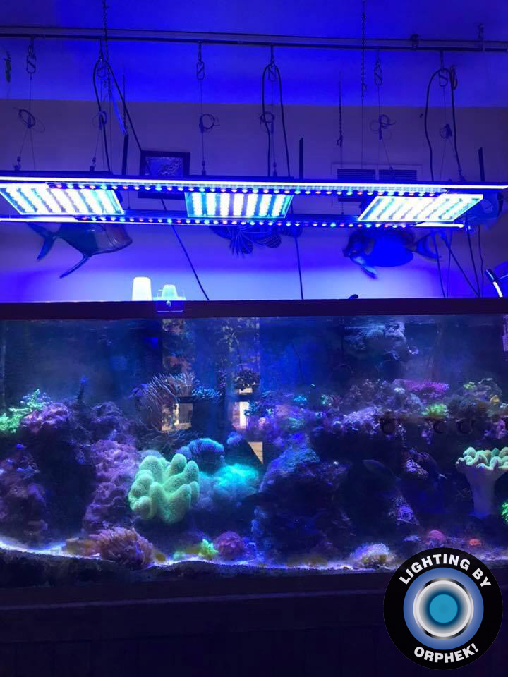 orphek strongest reef aquarium led lighting in market
