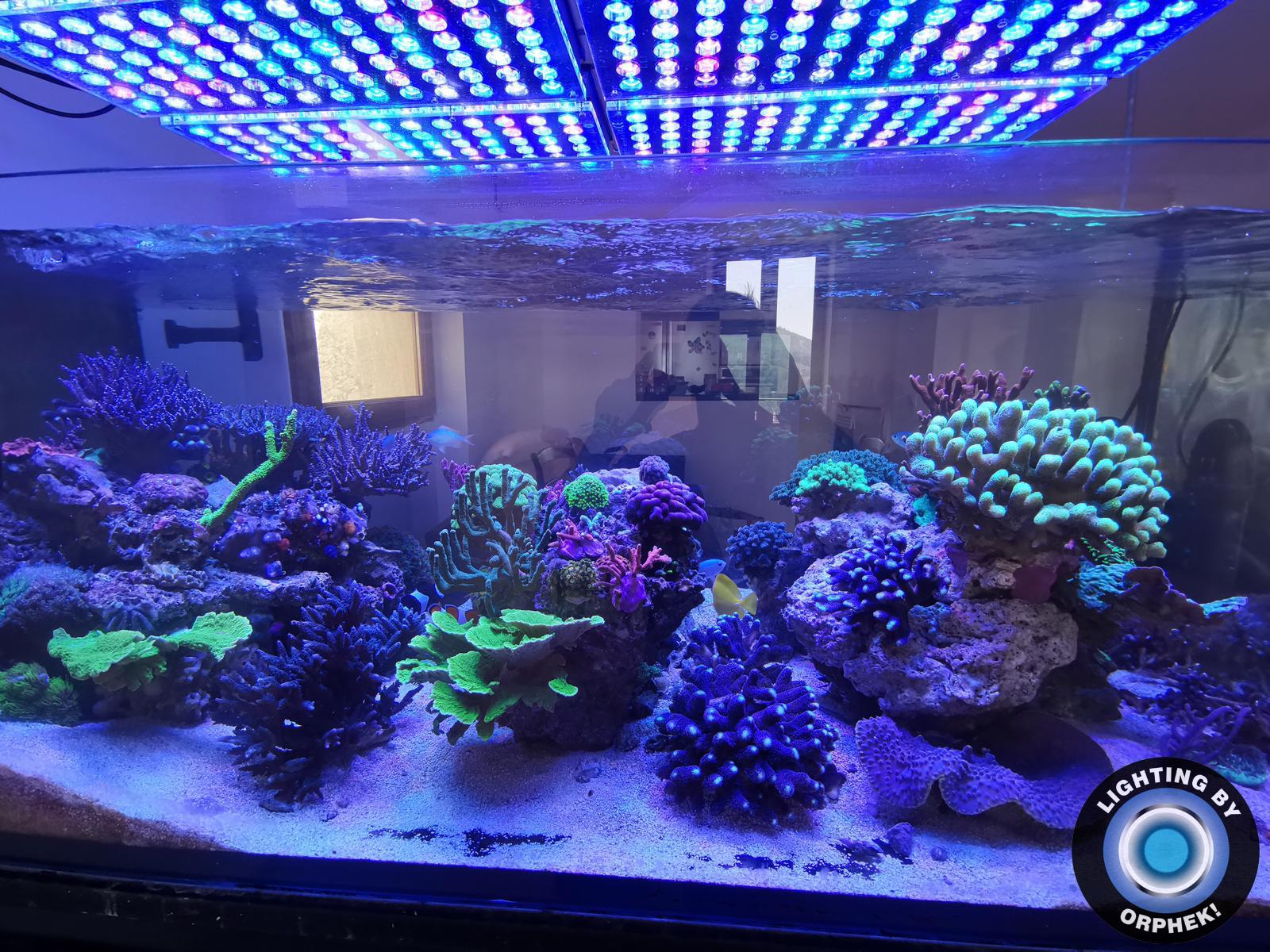 atlantik v4 iluminación del acuario de arrecife más profundo 2020