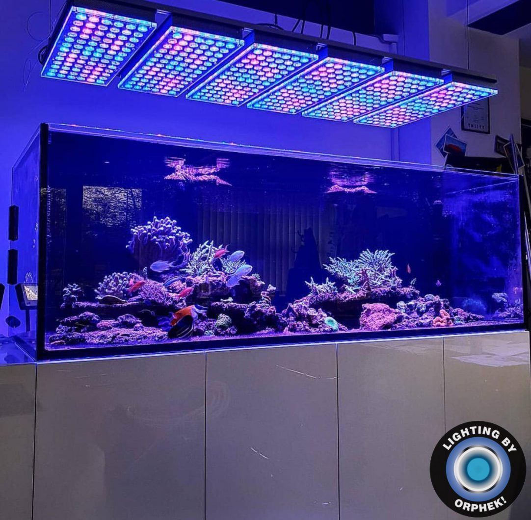 orphek atlantik v4 reef aquarium lumière LED