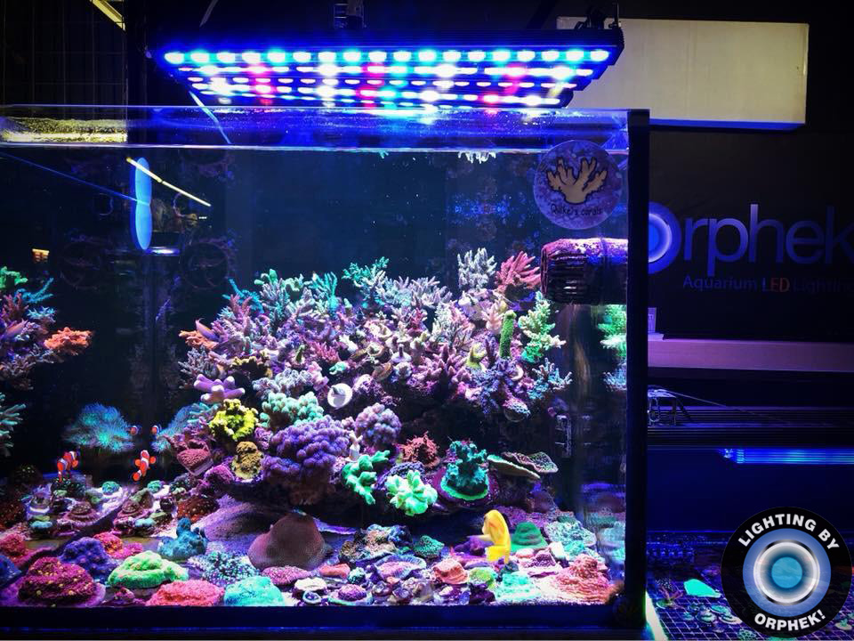 reef tank's best LED strip 2020
