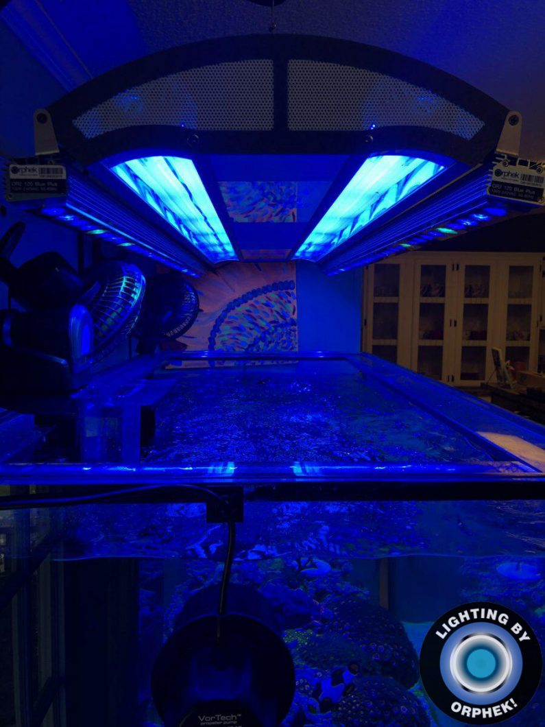 saltwater reef aquarium best lighting 2020