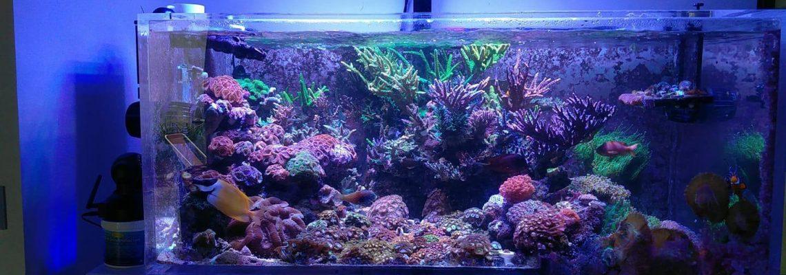 best saltwater marine aquarium lighting
