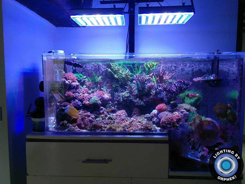 migliore illuminazione dell'acquario marino di acqua salata