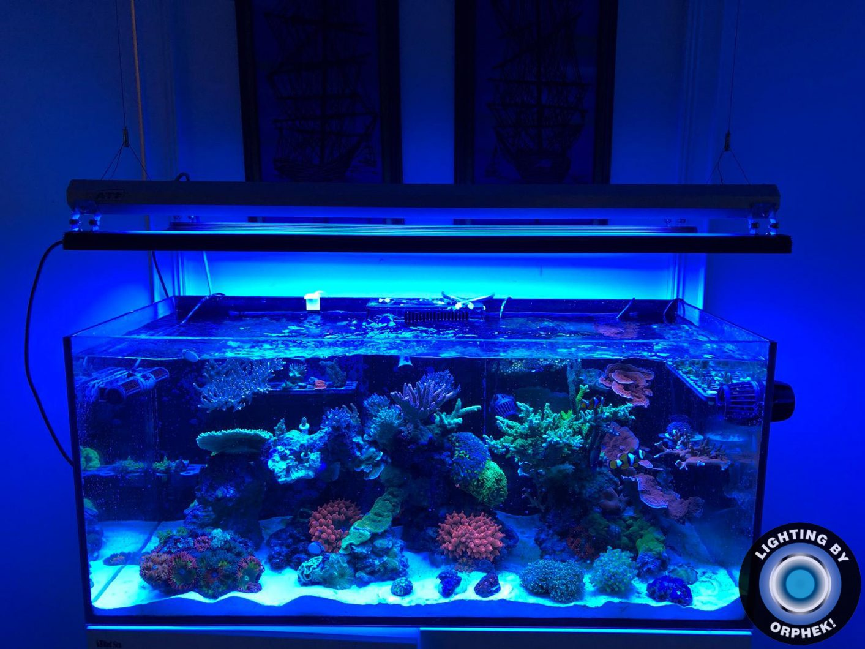 beste bunte Riffaquarium der LED-Beleuchtung