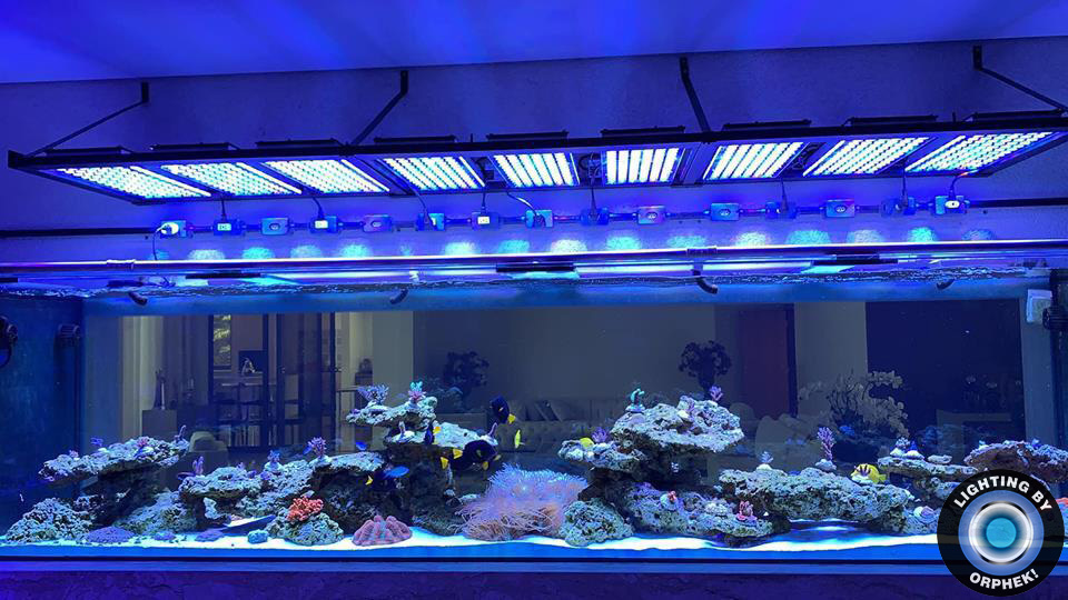 stor saltvand akvarietank LED-belysning
