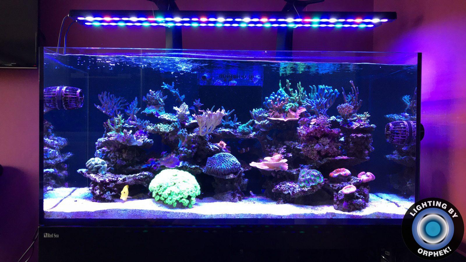 лучшая рифовая аквариумная светодиодная лента 2020