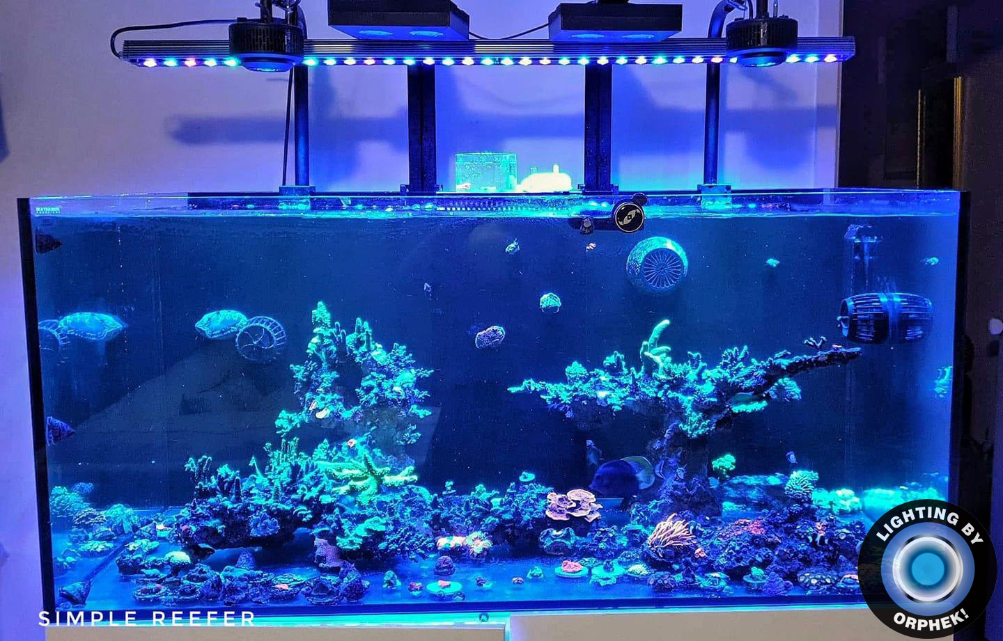 best saltwater reef corals LED strip 2020