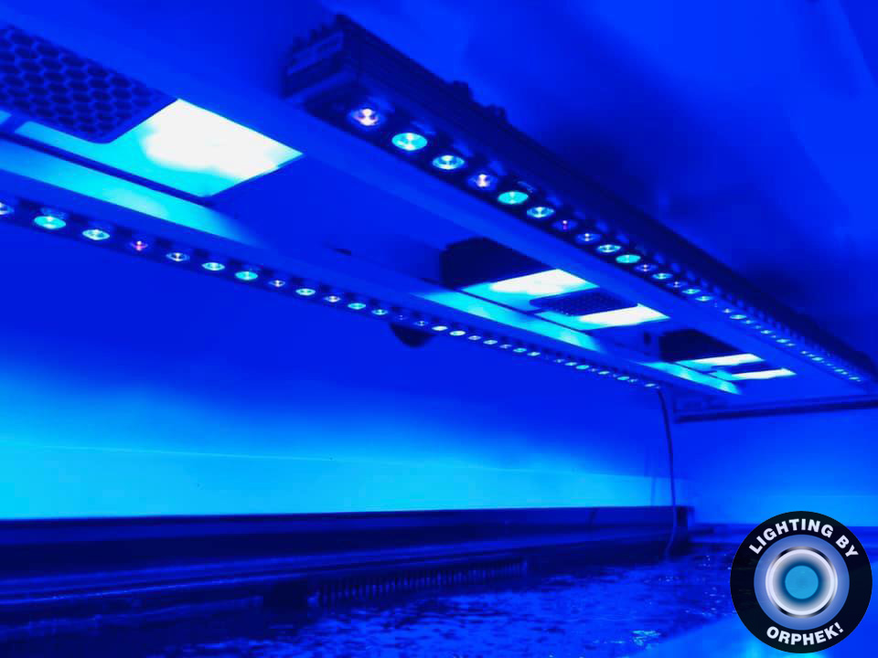 orphek LED bar beest récif aquarium LED