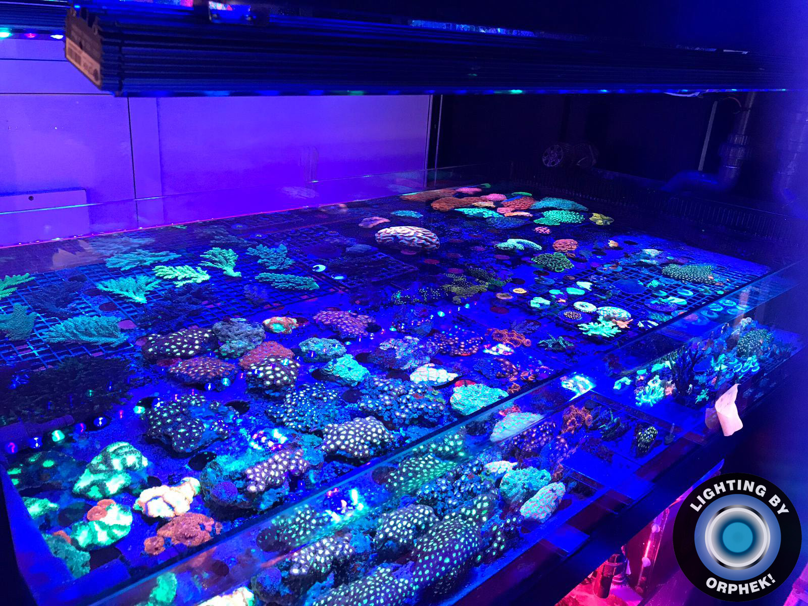 최고의 암초 산호 수족관 조명 2020