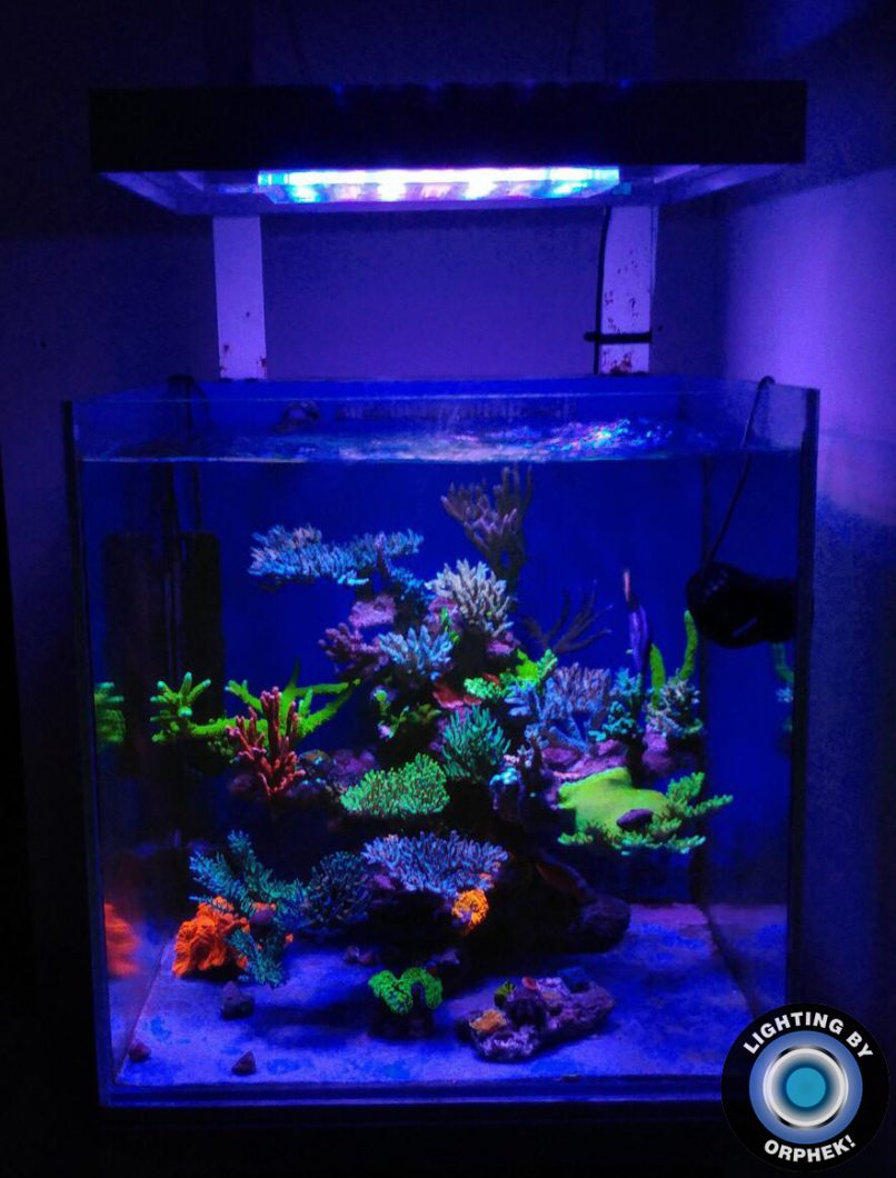 orphek best coral growing led lighting