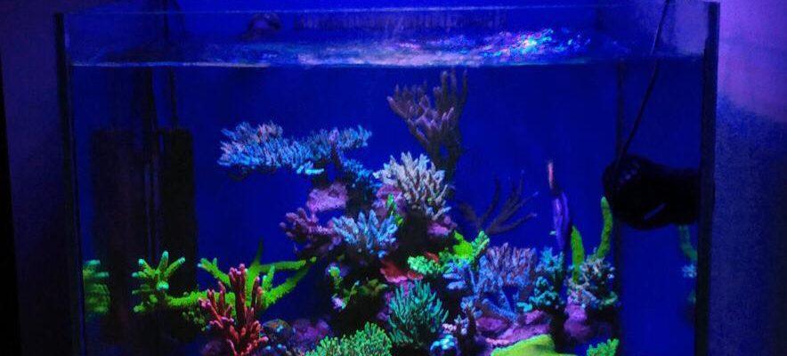 orphek best coral growing led lighting