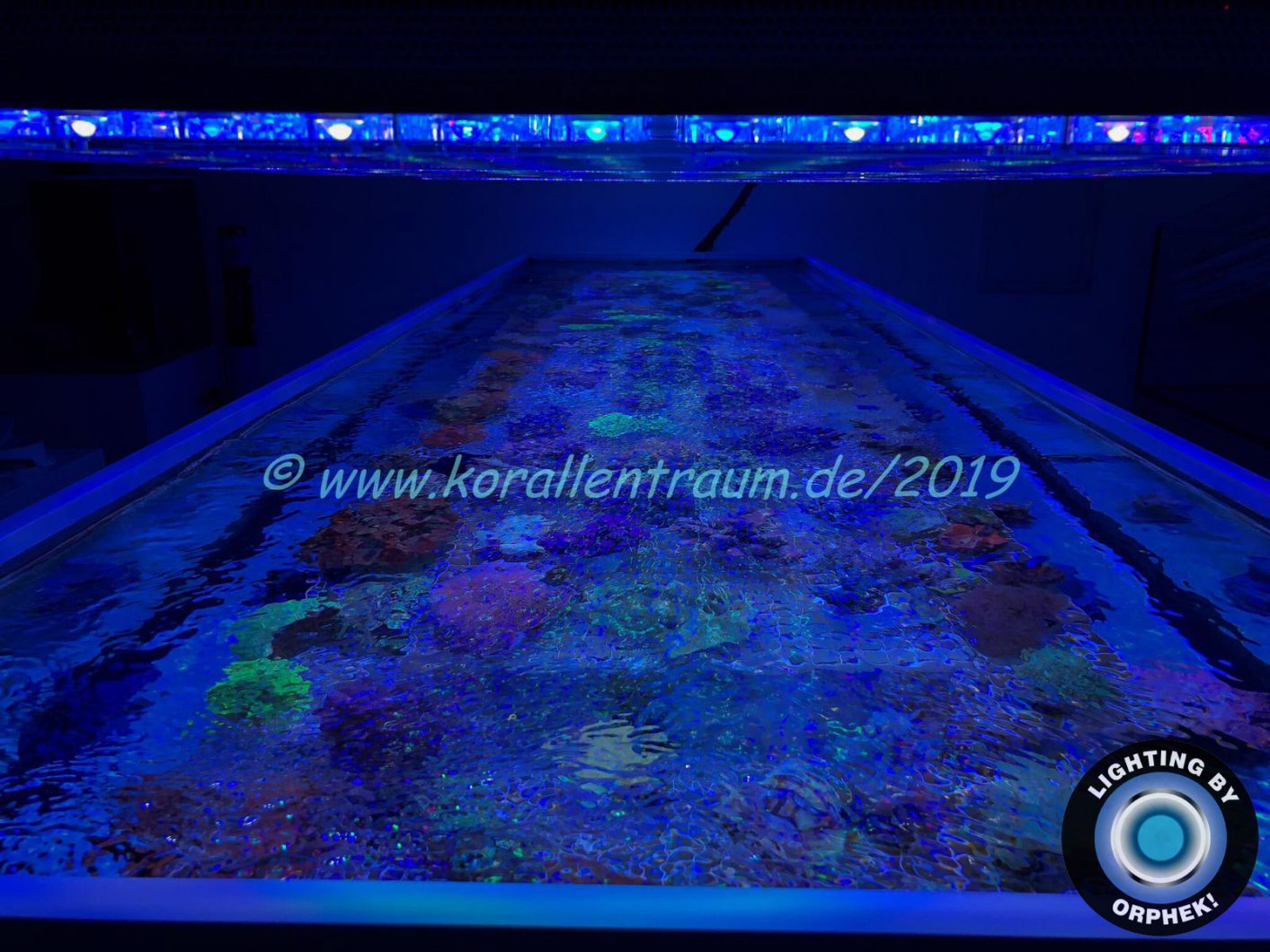 strongest LED lighting reef saltwater aquarium