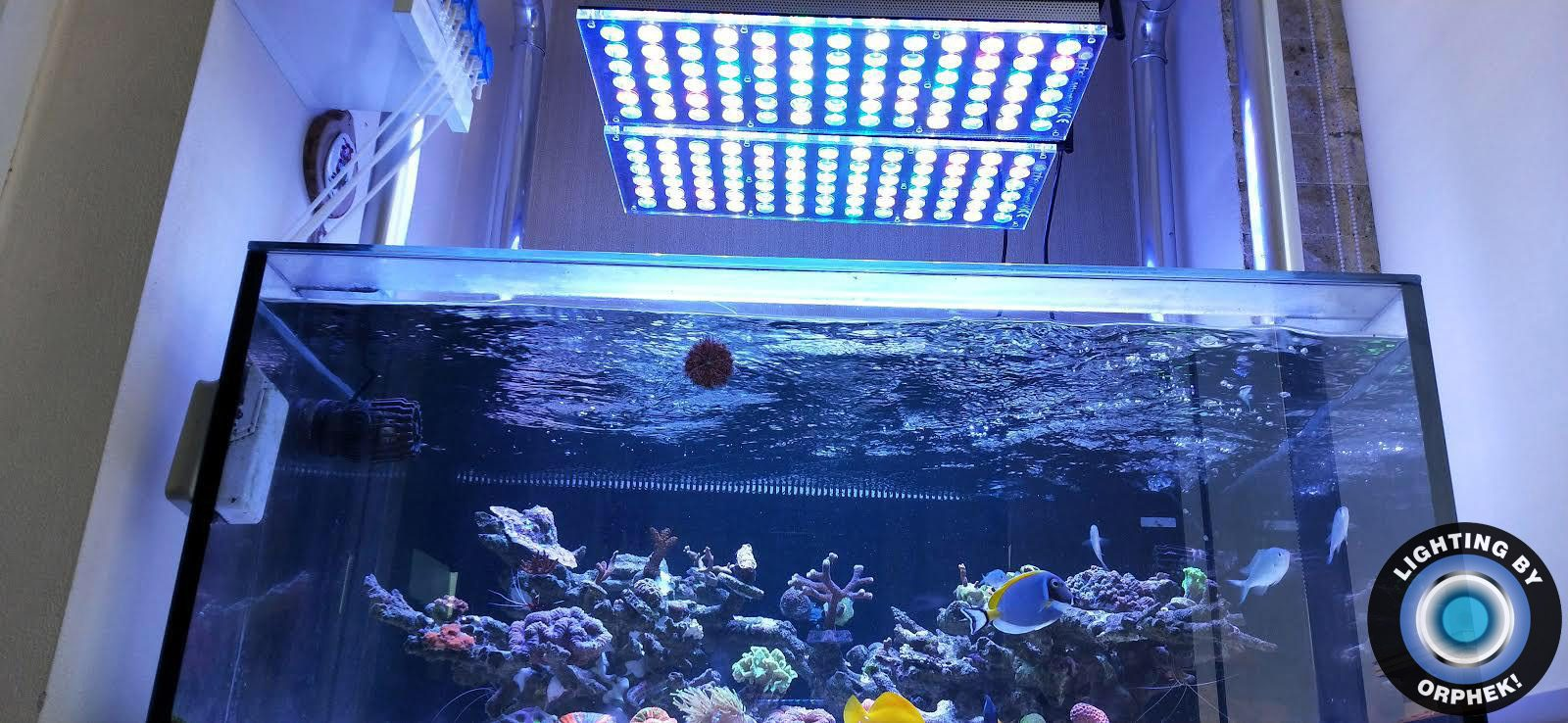 best LED aquarium lighting 2020