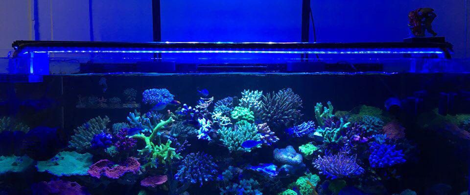 orphek best saltwater tank led lighting 2020