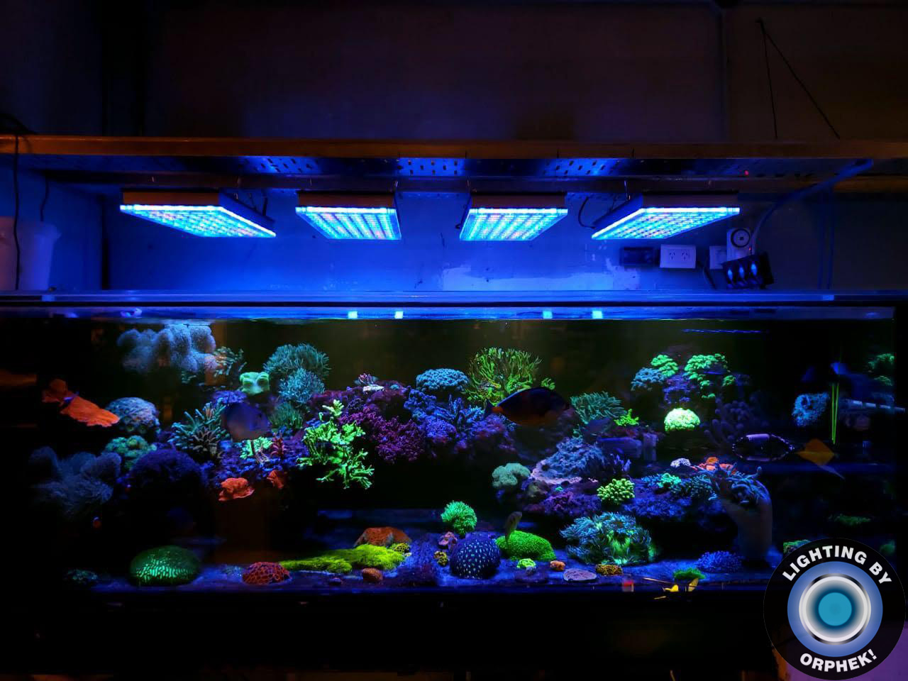 paling apik aquarium LED lampu 2020