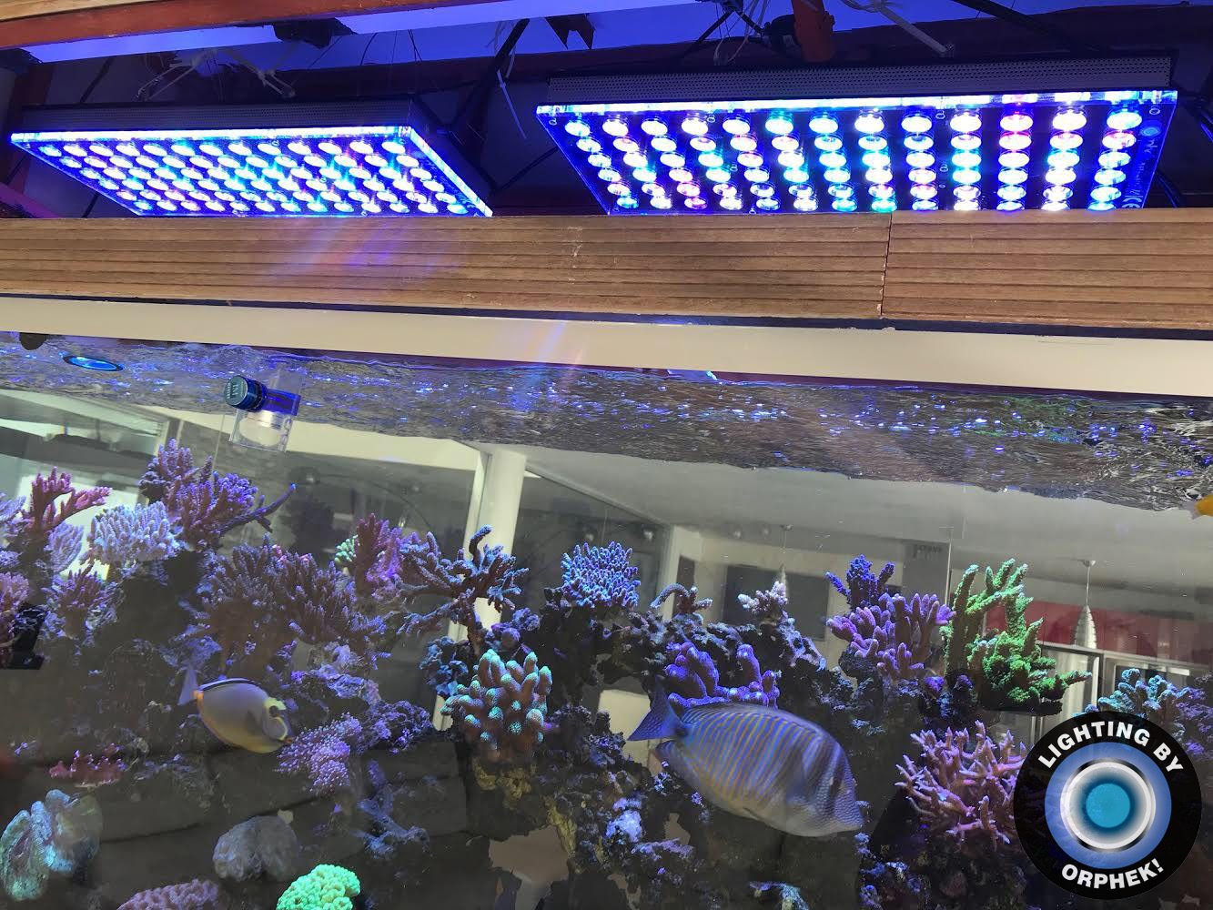 orphek atlantik v4 best reef aquarium LED light 2020